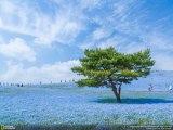 Голубая Вселенная